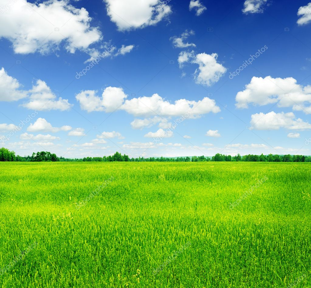 Summer landscape. Green grass and blue sky. — Stock Photo #10102095