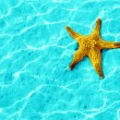 Starfish — Stock Photo #8760653