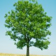 Tree — Stock Photo #8913561