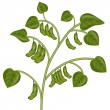 Soybean Plant — Stock Vector