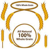Whole Grain Wheat Set — Stock Vector