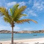 Coconut Palm on a Caribbean Beach — Stock Photo #9980309
