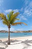Coconut Palm on a Caribbean Beach — Stock Photo