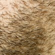 Beard Hair Face Growth — Foto de Stock