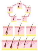 头发周期 — 图库照片
