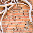 Antique brick wall with dry root tree. — Stock Photo