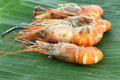 Pile row of shrimp grilled — Stockfoto