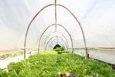 養液栽培のファームの野菜. — ストック写真