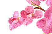 Artificial Pink Vanda on white background — Stock Photo
