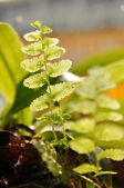 Fern with water drop on leaf — Stock Photo