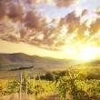 Vineyard — Stock Photo #8129575