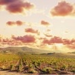 Vineyard — Stock Photo #8619451