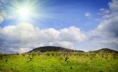 Spring nature — Stock Photo