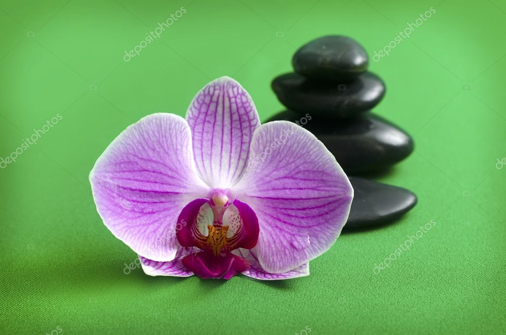Zen stones and orchid — Stock Photo #9688943