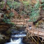 Постер, плакат: Autumn creek with hiking trails and foliage