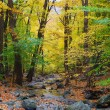 Autumn woods and creek — Stock Photo #9087873
