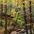 Autumn woods with yellow maple trees and creek — Stock Photo #9087992