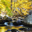 Creek in forest mountain — Stock Photo #9088791