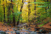 Autumn woods and creek — Stock Photo