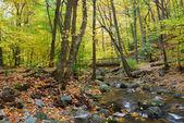 Wood bridge with Autumn foliage — Foto de Stock