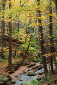 Autumn woods with yellow maple trees and creek — Stock Photo