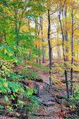Bear Mountain forest — Stock Photo
