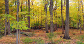 Bear Mountain forest panorama — Stock Photo