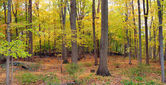 Bear Mountain forest panorama — Stock Photo