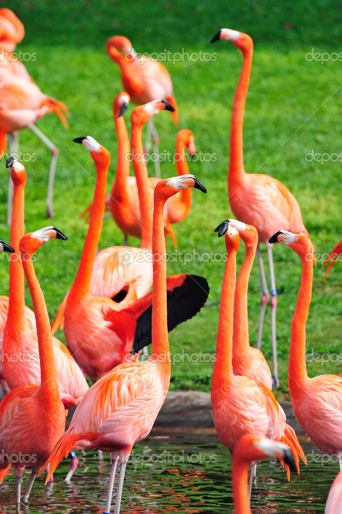 Flamingo in Miami zoo in red color — Stock Photo #9859031