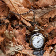 Watch on autumn leaves — Stockfoto #9350254