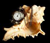 Watch on a shell — Stockfoto