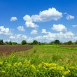 Stock Photo: Green meadow and cloudy blue sky