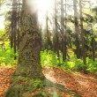The forest in the light — Stock Photo