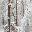 Trees in the snow in the forest in winter - Stock Photo