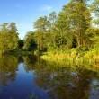 River bank in forest at sunset — Stock Photo #9537856