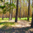 Sunny forest - Stock Photo