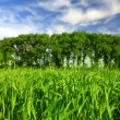 Royalty-Free Stock Photo: Green field in spring