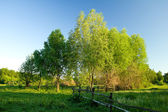 Spring landscape with trees — Stock Photo