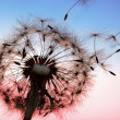 Dandelion — Stock Photo #8452504