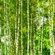 Forest birch — Stock Photo #9942246