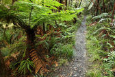 Trail in tropical forest — Stock Photo