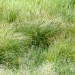 Grasses — Stock Photo #8074860