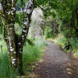Stock Photo: Walking trail in forest