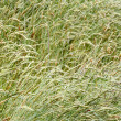 Grasses — Stock Photo #8076285