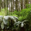 Ferns in a tropical forest — Stock Photo