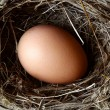 Egg in nest — Stock Photo