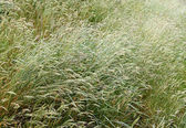 Grasses — Stock Photo