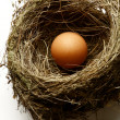 Egg in nest — Stock Photo #8389809