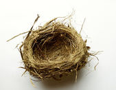 Empty nest on plain background — Stock Photo