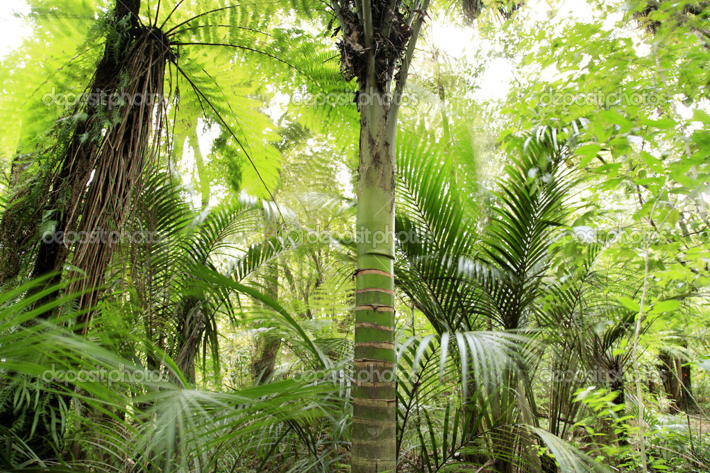 Palm tree and foliage in tropical jungle — Stock Photo #8893205